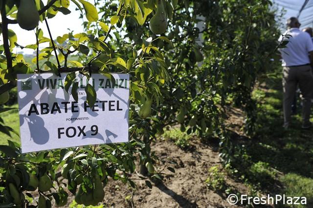 Vivai Rosso Antonio : Fox9 portinnesto open day vivai f.lli zanzi